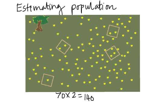 B2 Lesson8 Distribution of organisms 1