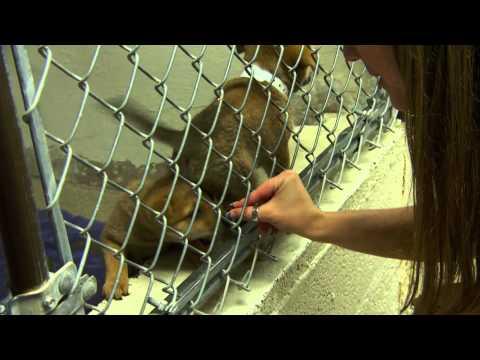 Volunteering at the Arizona Humane Society