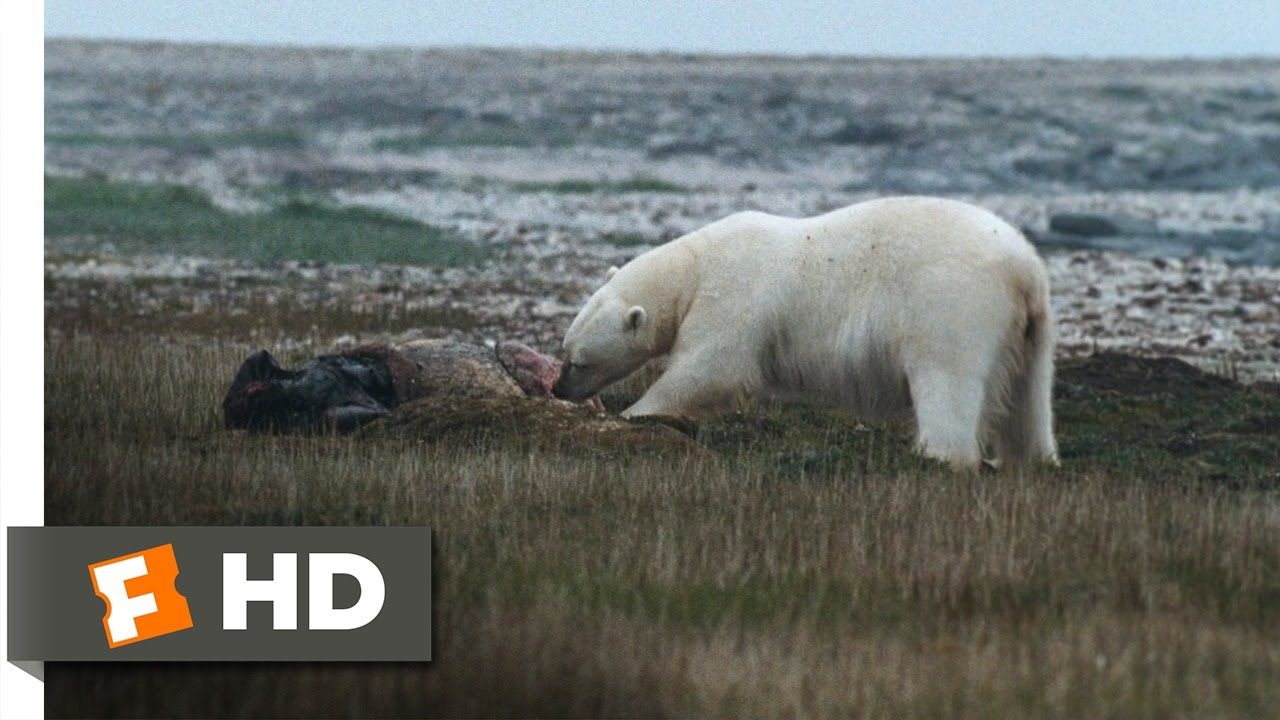 Download Arctic Tale (9/10) Movie CLIP - Guarding the Food (2007) HD