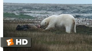 Arctic Tale (9/10) Movie CLIP - Guarding the Food (2007) HD