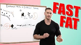 Fast Fat vs Slow Fat - The Speed of Fat Digestion