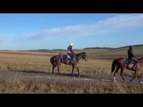 Richard Hannon - Orpen filly video update 23 01 19