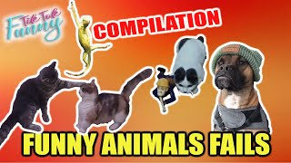 TRY NOT TO LAUGH - Best Funny Fails of the Week! FUNNY ANIMALS FAILS 🐾🐶🦎🐢😽🐩😸 TikTok Funny 🐈