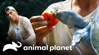la-tortuga-trompeta-wild-frank-en-busca-del-dragn-animal-planet