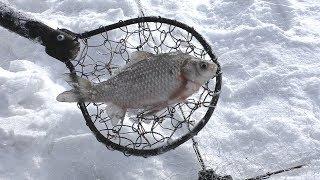 ЗИМНЯЯ РЫБАЛКА НА ХАПУГУ ХЛОПОК Рыбалка на Амуре на что поймать рыбу карася в глухозимье