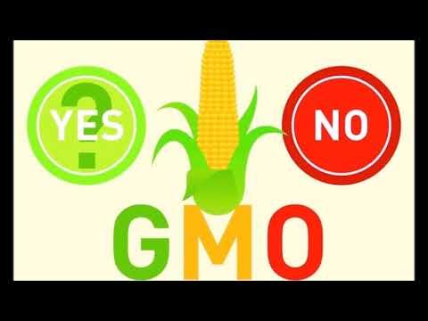 GMOs Aren't Harmful