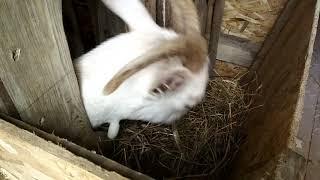 Планировка сарая-стайки для содержания нескольких видов животных.