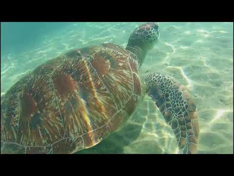 La danse de la tortue   2017