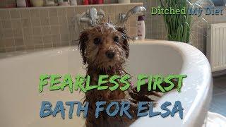 Ep: 15 Cavapoo Puppy's first bath! Plus Talk About Having a Beach Body.....