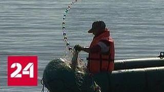 На Колыме проходит лососевая путина(Подпишитесь на канал Россия24: https://www.youtube.com/c/russia24tv?sub_confirmation=1 В Магаданской области рыбакам в этом году..., 2016-09-09T09:16:03.000Z)