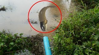Creative Man Make Water Plastic Pipe for Catch a lot of Fish on the Rice Field near my Village