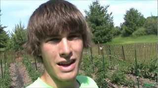 Organic Heirloom Vegetable Garden Update