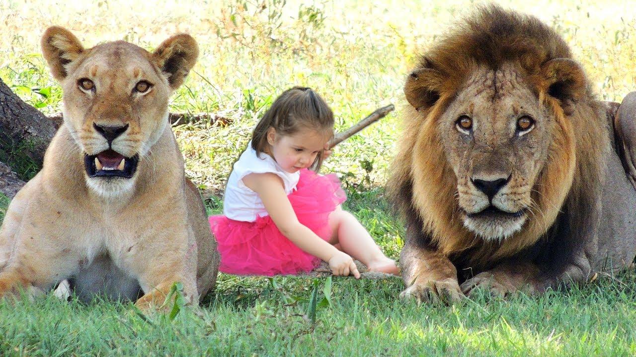 Неверојатни животни кои спасиле човечки животи