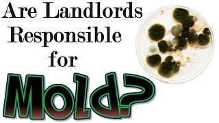 Are Landlords Responsible for Mold? - Landlord Tips