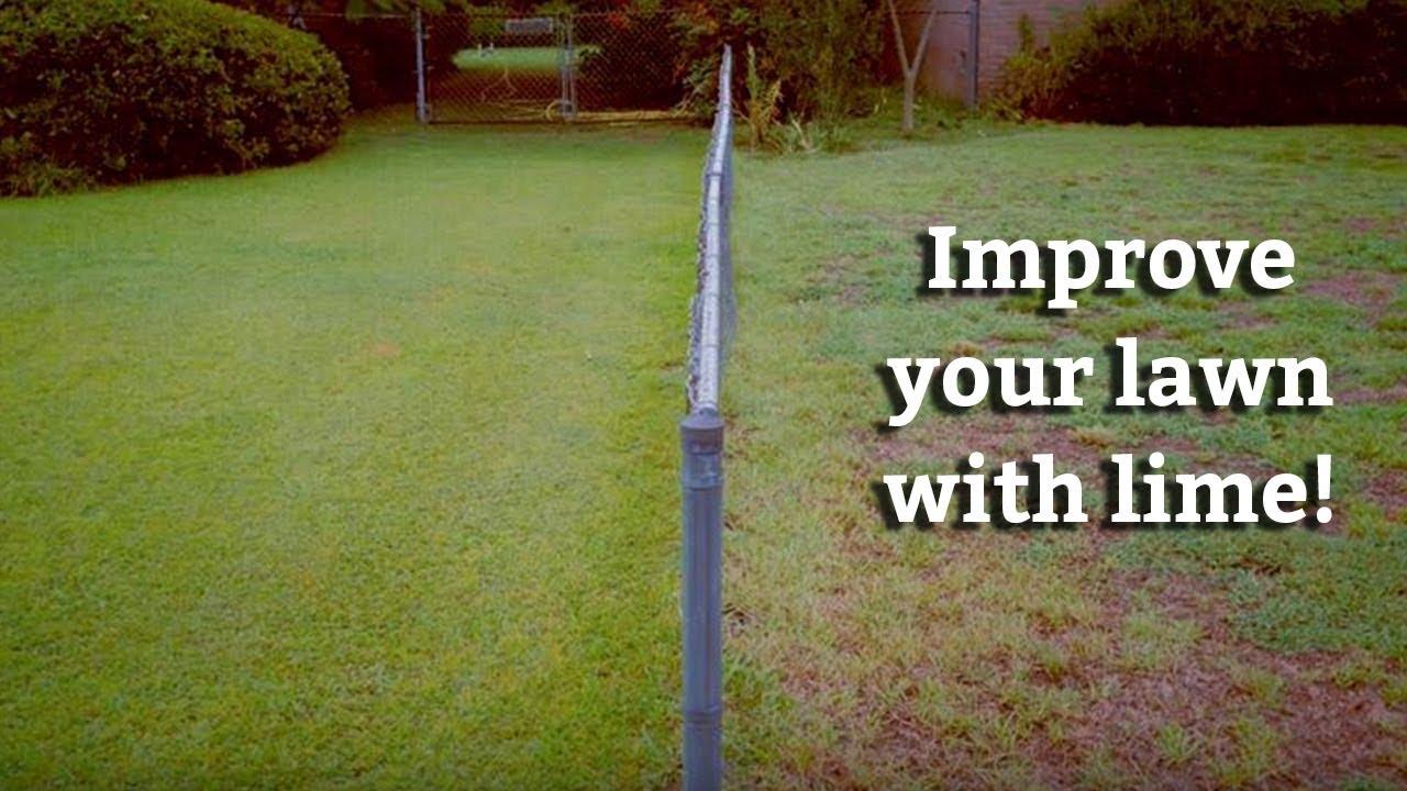 The ideal lawn is how to sow. Tips and Tricks