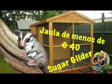 Jaula Del Como Una Tu AzúcarDe €40 Glider Serpiente Para mordida Hacer Petauro Sugar O BtrxQdCsh