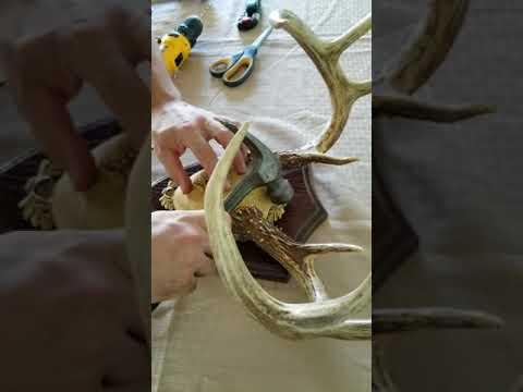 The Taxidermists/' Woodshop Dark Oak Ultimate Antler Mounting Kit for Deer