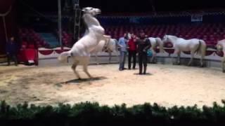 De witte paarden van Circus Renz