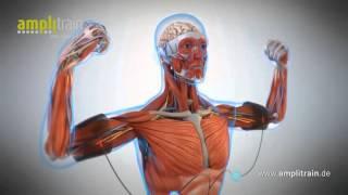 Что такое ЭМС тренировки? Как это работает? Как быстро похудеть с помощью EMS за 20 минут в день