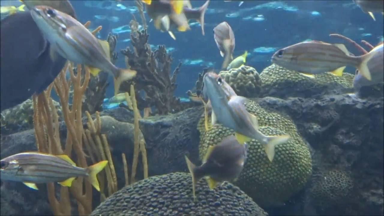 フロリダ 水族館
