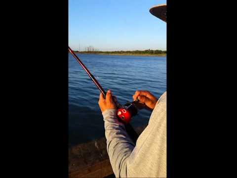 Big jack fish at seawolf park youtube for Galveston fishing report seawolf park