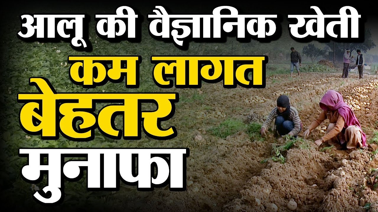 Scientific Cultivation of Potato (आलू की वैज्ञानिक खेती) - कम लागत में अधिक कमाई | Green TV