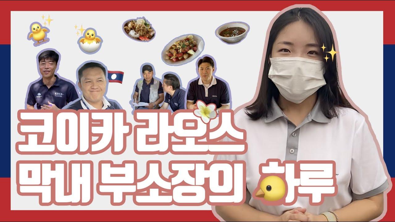 라오스 🇱🇦  카오삐약🍜 좋아하는 코이카 라오스 부소장, 삐약↗ 삐약↗ 병아리🐣까지 보러가다!? (feat.밀크포라오)