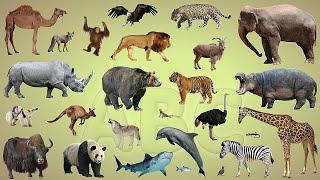 Dạy bé các con vật bằng tiếng anh TỔNG HỢP 100 CON