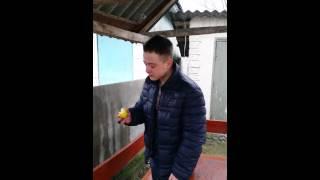 Как правильно кушать лимон :D