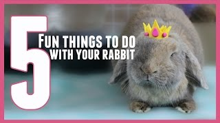 5 FUN THINGS TO DO WITH YOUR RABBIT! 🐰