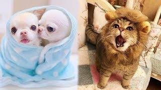 Funny Baby animals Videos Compilation 2019