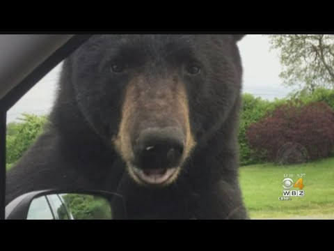 Gary Cee - Has A Bear Ever Opened Your Car Door?