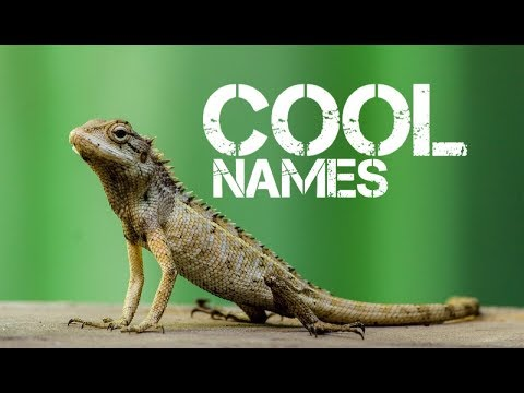 male reptile pet names starting with o - YouTube