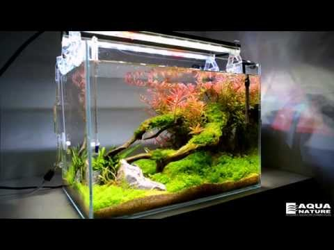 Planted nano tank freshwater