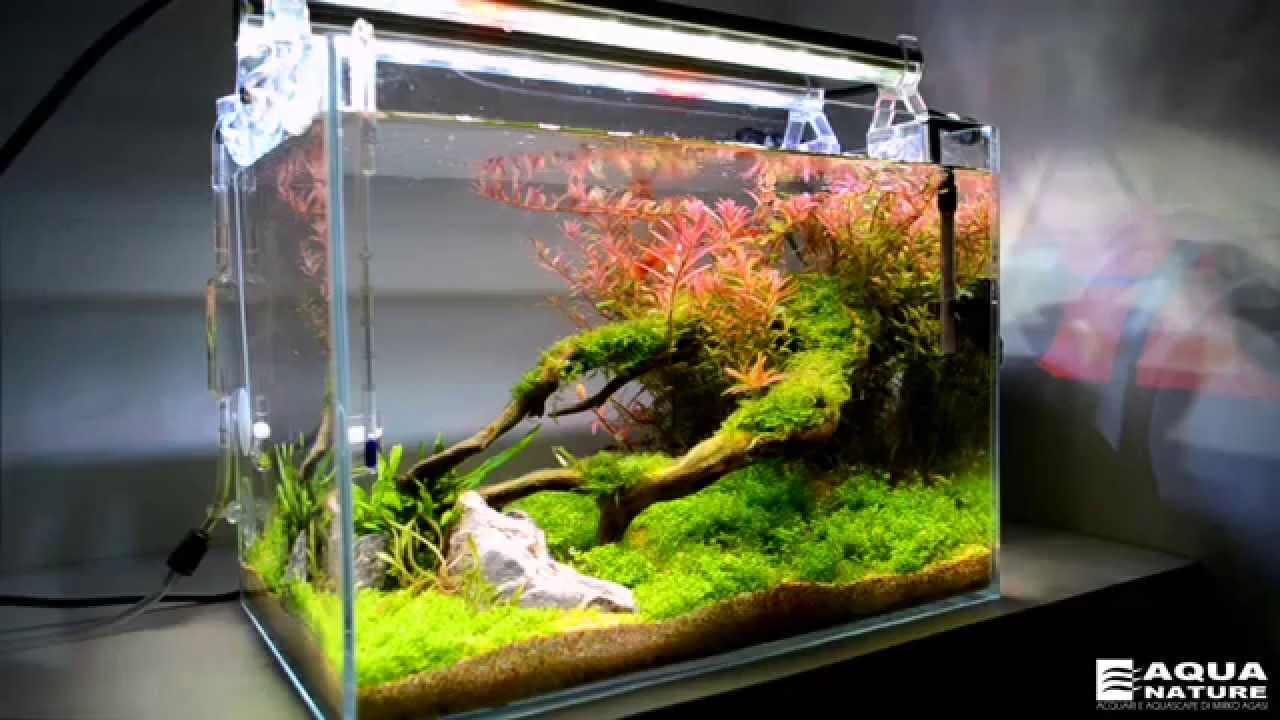 Planted Nano Tank Freshwater Youtube