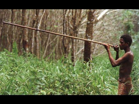 วิถีคนป่าอเมซอน ล่าสัตว์ป่าซุ่มเปาลูกดอกยาสลบ