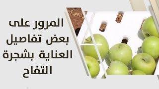 أمل القيمري - المرور على بعض تفاصيل العناية بشجرة التفاح