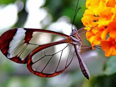 Gato Barbieri - Butterfly ( Гато Барбьери - Бабочка )