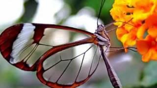 """Gato Barbieri - Butterfly"" ( ""Гато Барбьери - Бабочка"" )"