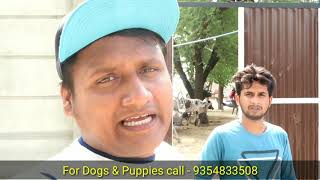 CHEAPEST DOGS MARKET  WHOLESALE Dog Market   DOGS IN CHEAP PRICE   Dogs in India   BUY DOGS India