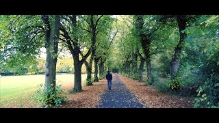 Colours of Autumn in 4K Cinematic. DJI Osmo
