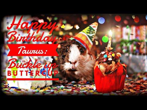 Happy Birthday Taurus: Buckle up Buttercup - 동영상