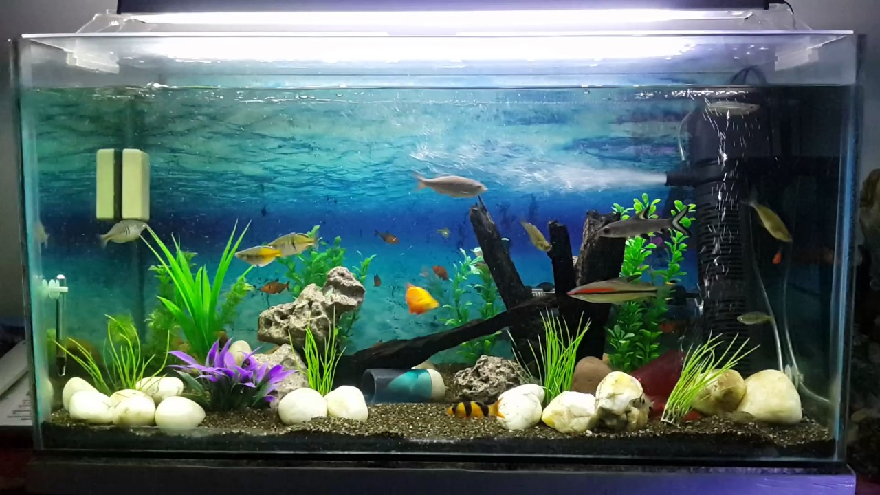Super The 150 Ltr community fish tank. - YouTube NE28