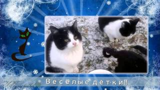 Слайд шоу кошки поздравление для внука говорящие коты
