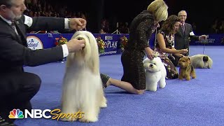 National Dog Show 2013: Best in Show (Full Judging) | NBC Sports