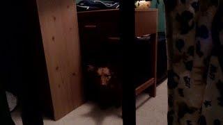 i filmed my dog roaming my room for 2 minutes.