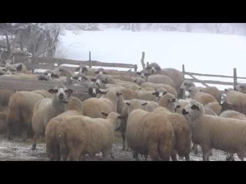 Hido Muratovic  - Zivot na Pesteru na minus 27