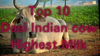 Top 10 Indian cow breeds for milk || gir cow information || indian dairy farming in hindi