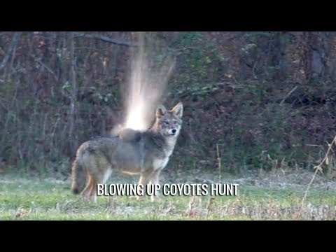Blowing Up Coyotes Hunt