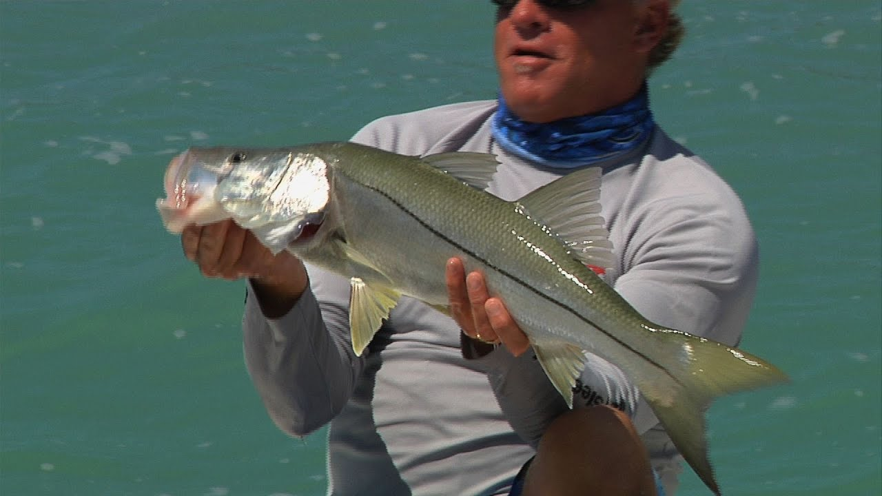 Key largo backcountry fishing for snook redfish in windy for Key largo fishing report